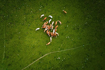 Drone Photography for Agriculture